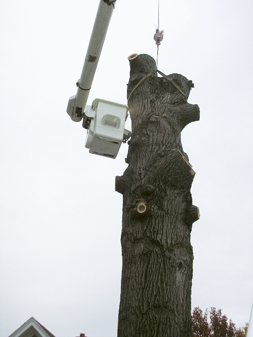 Tree removal by Custom Tree Care